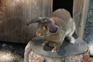 MisGrosi Kinderbetreuung Tiere streicheln
