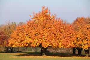 Herbst Gemeinsam Malen Leihoma